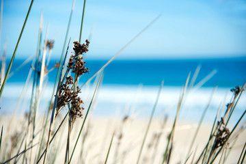 Gräser am Sandstrand