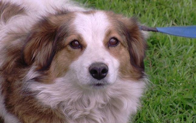 Aproape 20 de câini, cu vârste cuprinse între 7 săptămâni și 10 ani, își așteaptă viitori stăpâni în cadrul târgului de adopție Salvează,