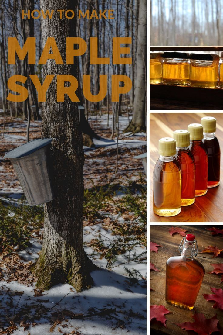 Episode 066 How To Make Maple Syrup Ft Michelle Of Soulyrested Heritage Acres Market Llc In 2020 Homesteading Skills Raising Backyard Chickens Hobby Farms