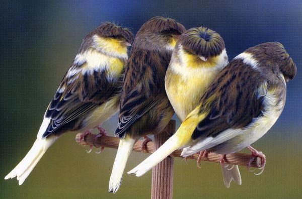 Kuş Türleri, Kuşların Özellikleri, Evcil ve Yırtıcı Kuşlar