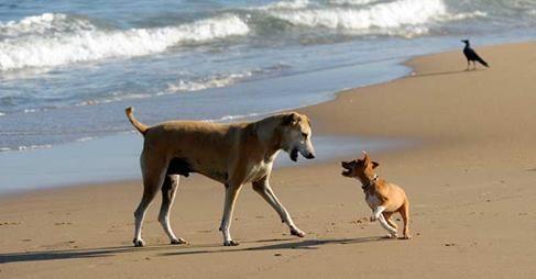 "21. Thema ""Dänemark Urlaub mit Hund – nein danke"" – Andreas Tierhilfe"