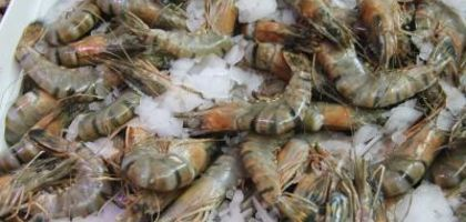 How to Start Freshwater Shrimp Farming