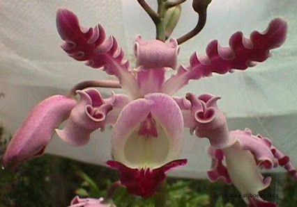 Flores belas/exóticas - Comunitate - Google+