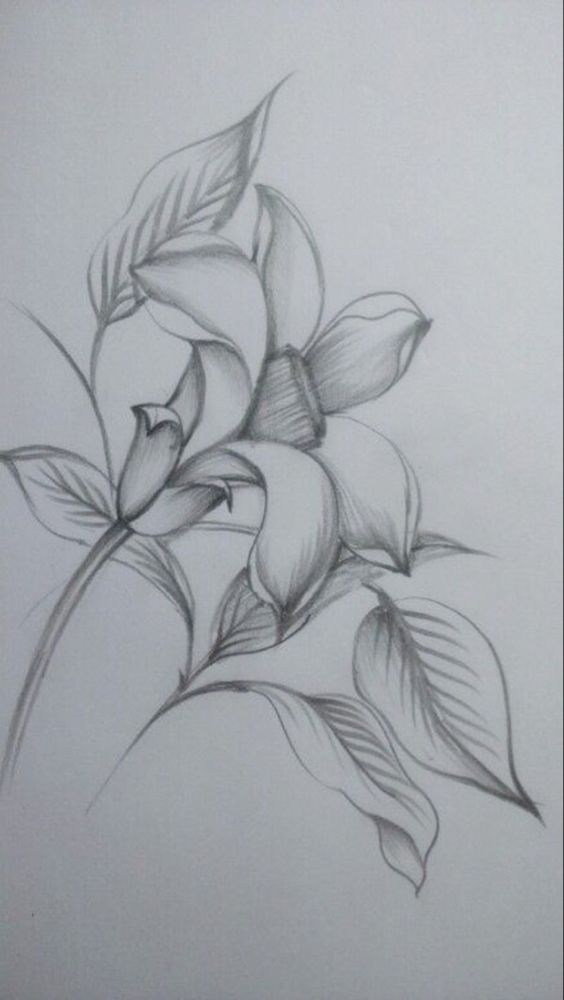 50 Easy Flower Pencil Drawings For Inspiration Flower Sketches Pencil Drawings Of Flowers Flower Sketch Pencil