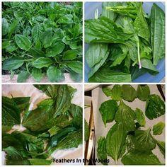 Táto rastlinka lieči takmer všetky zdravotné problémy a rastie na každom rohu…