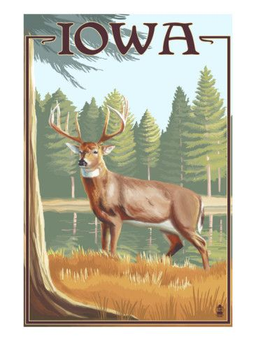 White Tailed Deer - Iowa Art Print. AllPosters.com