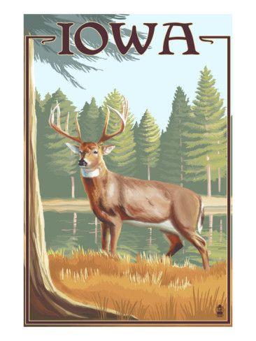 White Tailed Deer - Iowa Art Print. AllPosters.com