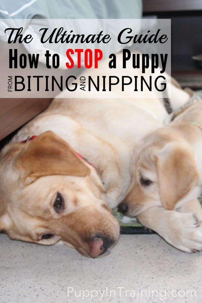 The Ultimate Guide How To Stop A Puppy From Biting And Nipping At