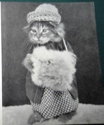 People: Dressing up cats and taking pictures of them since the beginning of time