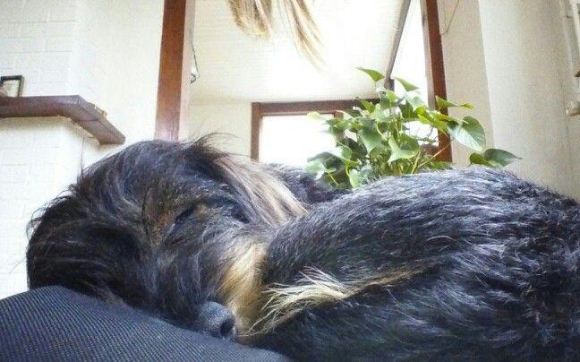 Oscar durmiendo
