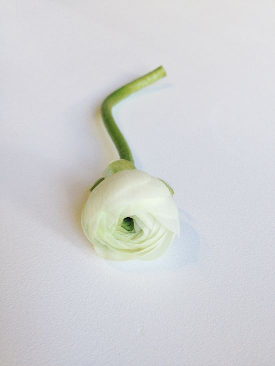 White ranunculus. #Flower #Wedding