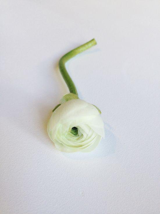 White ranunculus. #Flower #Wedding