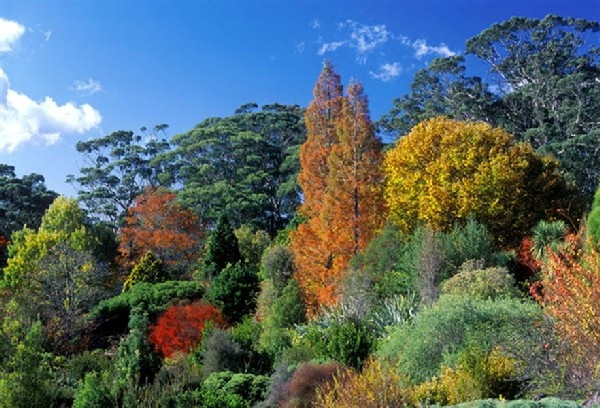 Glorious Autumn colours at Mt Tomah. The Blue Mountains. We walked the whole area of these wonderful botanical gardens  for two hours.
