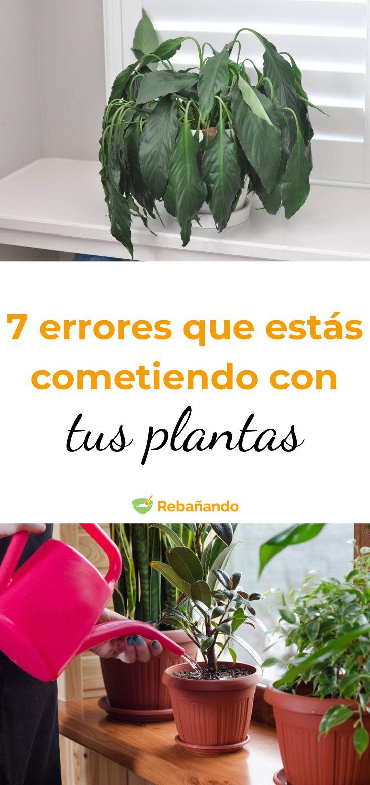 Así estás matando tus plantas sin darte cuenta