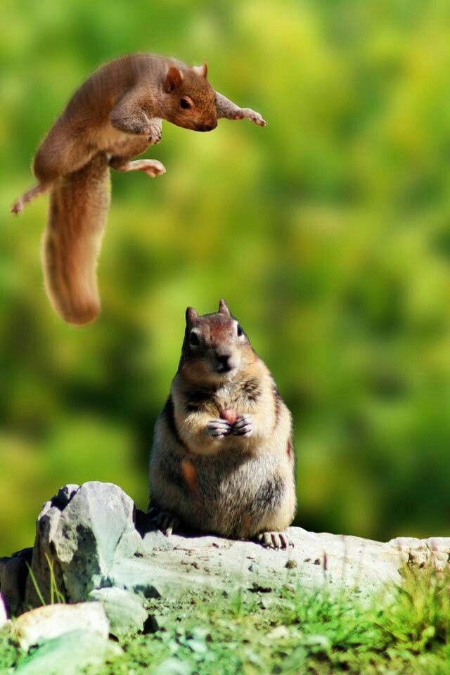 23 Best Squirrels Rule Images On Pinterest Squirrels