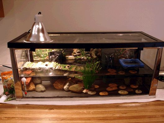 The 25 best turtle tank setup ideas on pinterest turtle for 55 gallon fish tank petco