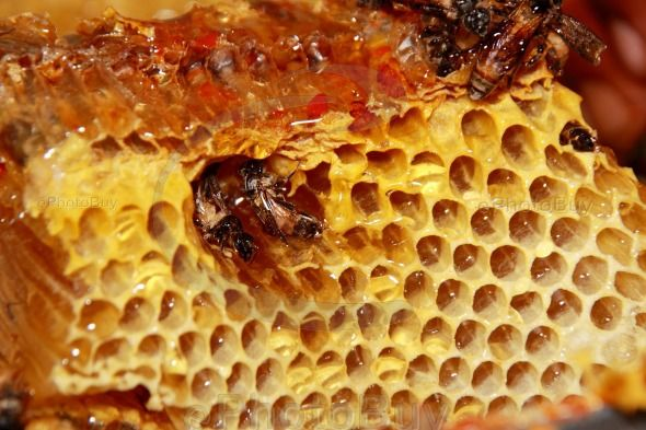 Sweet fresh honey and honeybees