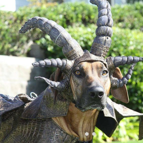 Dragon Dog Costume G O T Inspired Dragon Costume Headpiece