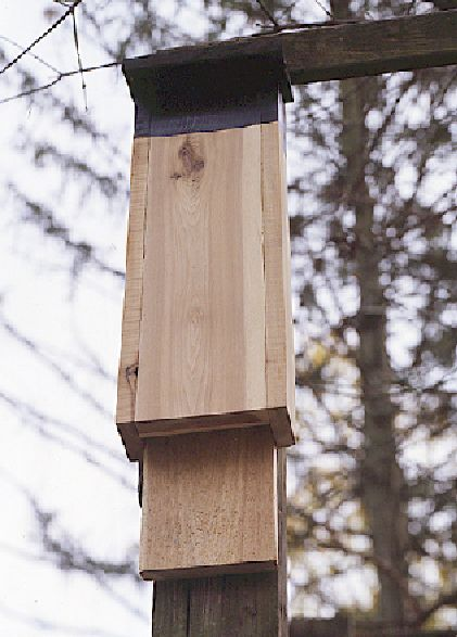 "A free article by Megan Fitzpatrick on building a bat house – from Popular Woodworking's book ""Birdhouses You Can Build in a Day."""