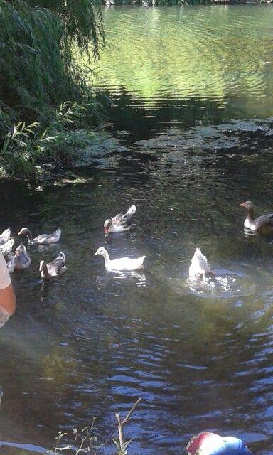 Fauna Jardin Botanico
