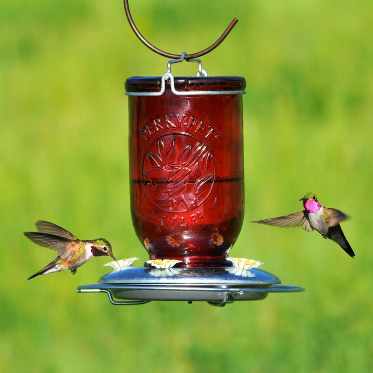 Great Idea Make Your Own Hummingbird Feeder With 25+ Our