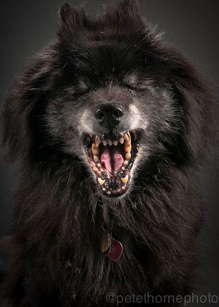 Old Faithful: Conmovedora Serie de Retratos de Perros en Avanzada Edad | FuriaMag | Arts Magazine