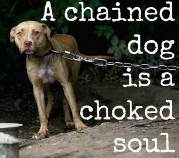 animal rights quotes on pinterest   animal rights  cat abuse    dogs animal rights