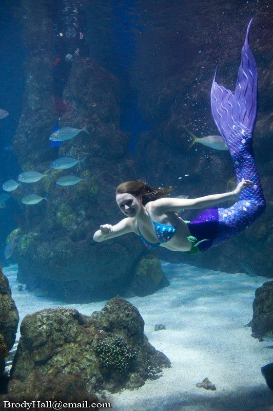 82 best images about under the sea on pinterest raising for Little mermaid fish tank
