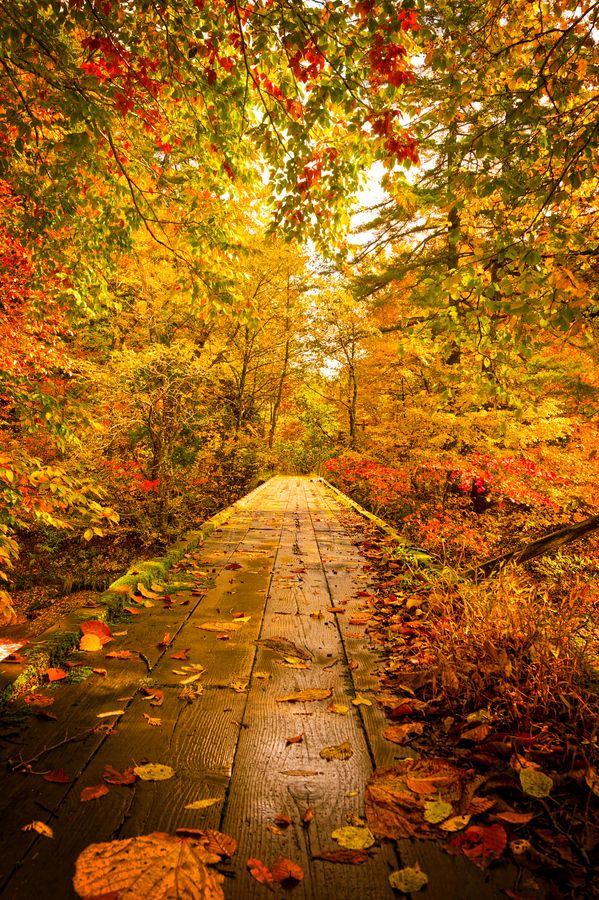 peaceful autumn.