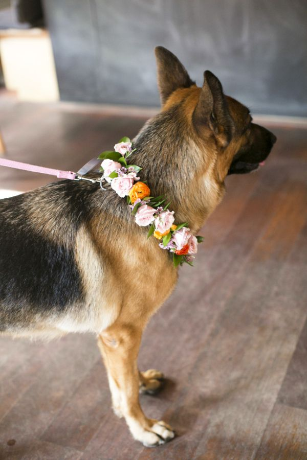 Shepherd in Floral Collar