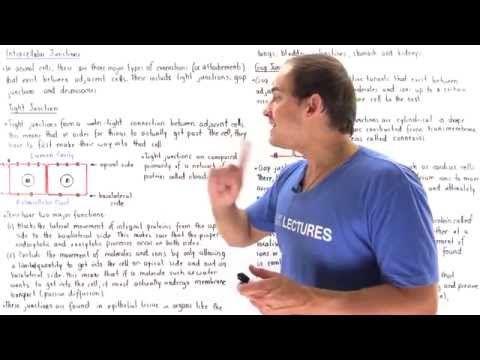 Lecture 3 Slide 5 ▶ USMLE Step 1 Basics - GAP Junctions - YouTube