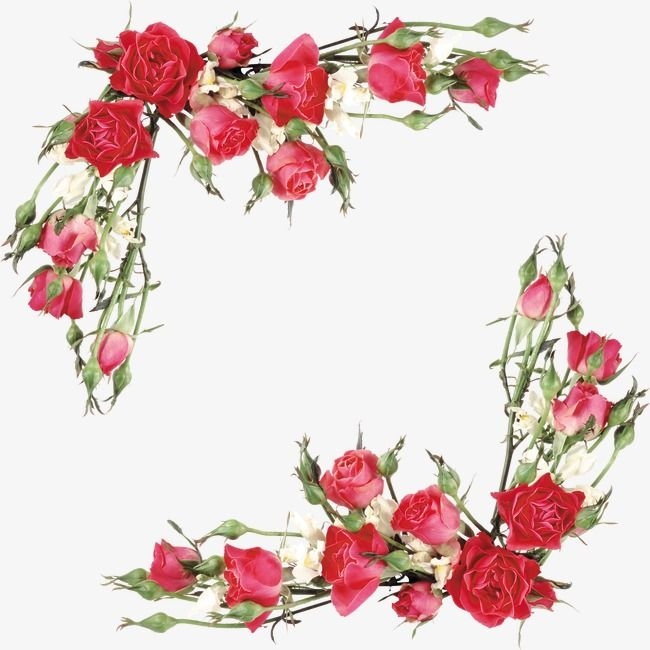 Rose Flowers Red Flower Png Transparent Clipart Image And Psd