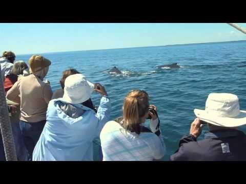 Observation des baleines dans la baie de Fundy   Nouveau Brunswick, vacances au Canada   Whales-n-Sails Adventures, Île Grand Manan