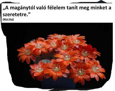Bár nem kaktuszról írok, de olyan szép! Nem igaz?