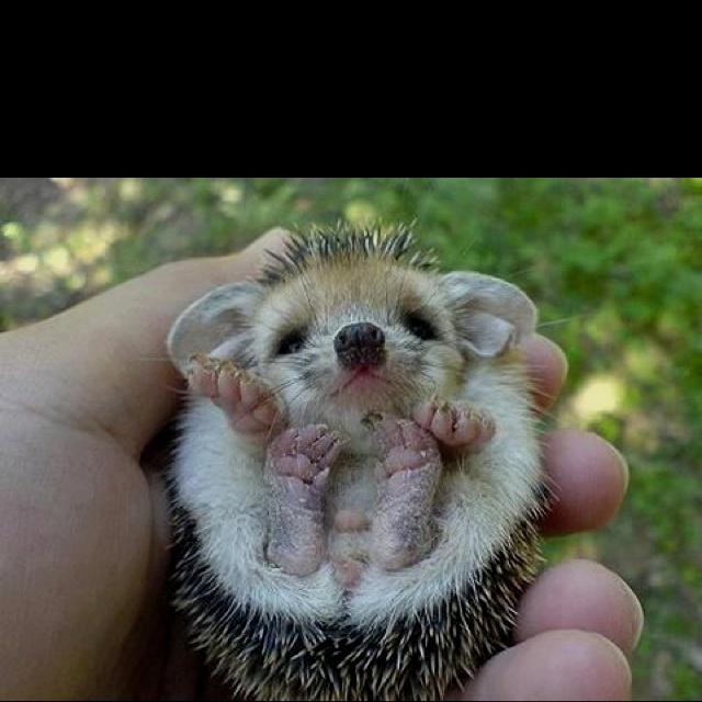Weird Animals Cute 2