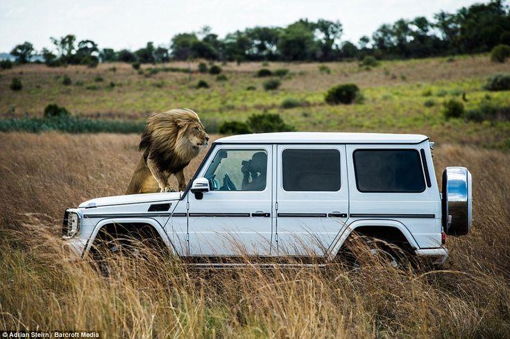 Зрелищная фотосессия Mercedes-Benz в Африке