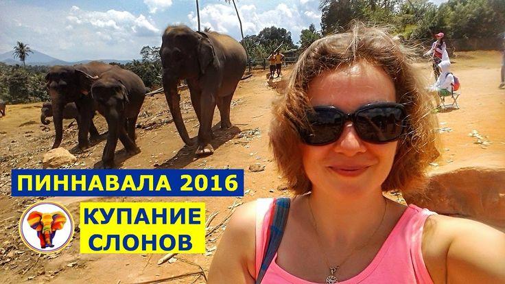 Поездка в слоновий Питомник Пиннавала, Шри-Ланка. Купание слонов