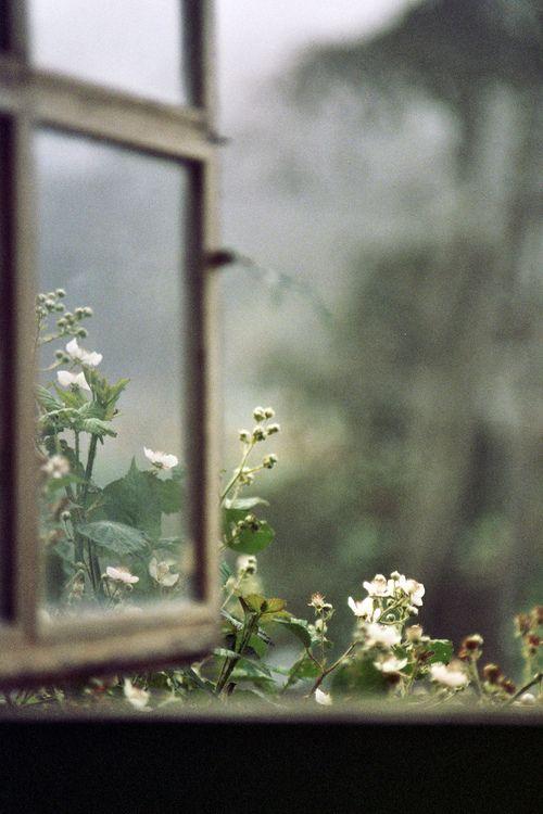 par la fenêtre ouverte
