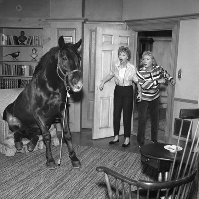 I Love Lucy!  See you can bring your horse in the house!