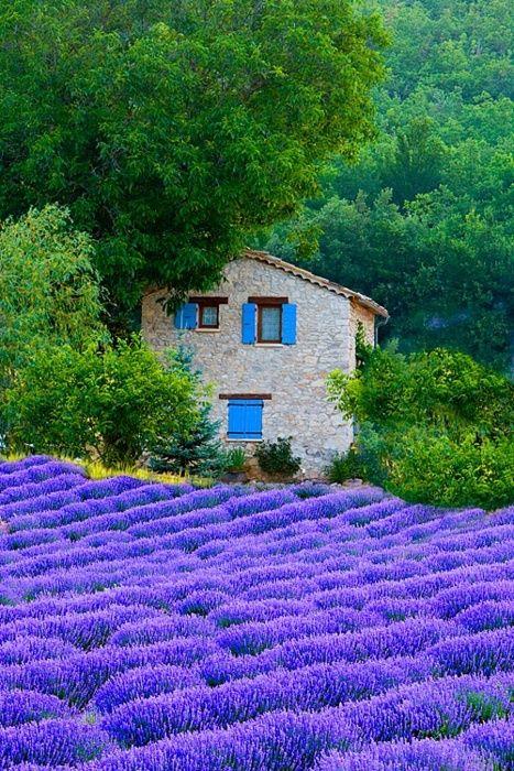 Lavender Fields, Sault, Provence, France。窓が面白い。ラベンダーと同じ色。