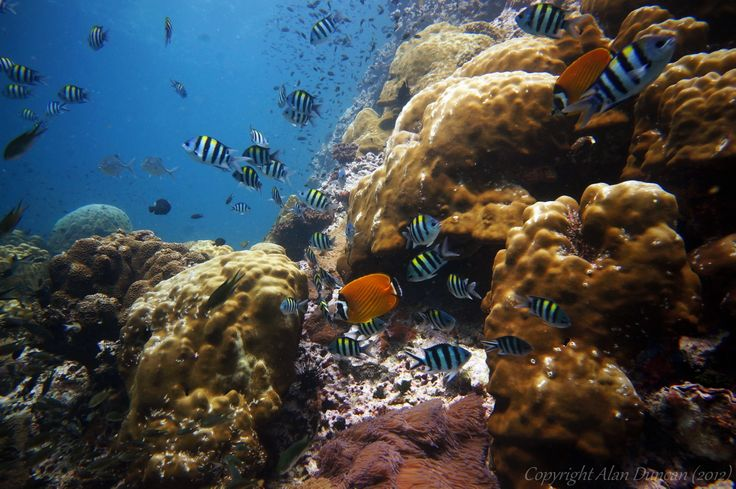 Sail Rock dive spot, Koh Phangan, Suratthani, Thailand.