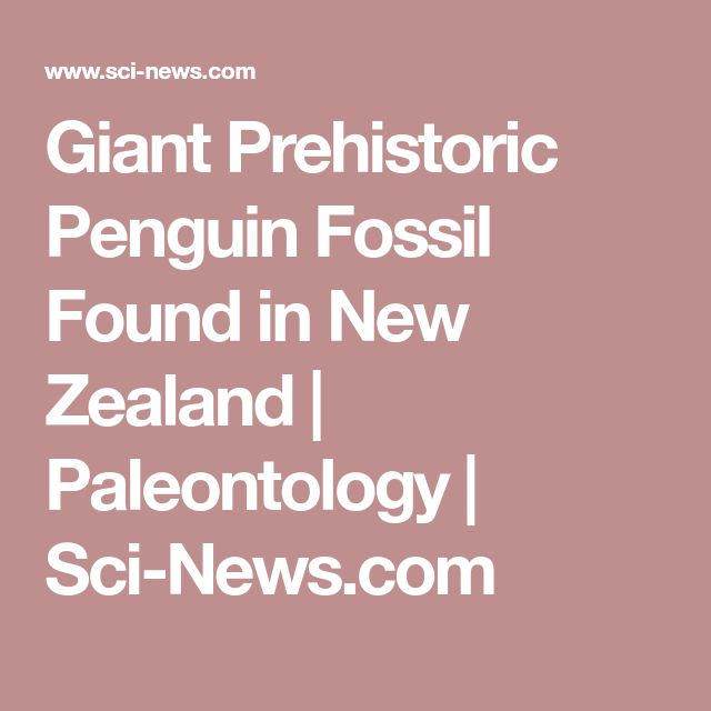 Giant Prehistoric Penguin Fossil Found in New Zealand | Paleontology | Sci-News.com