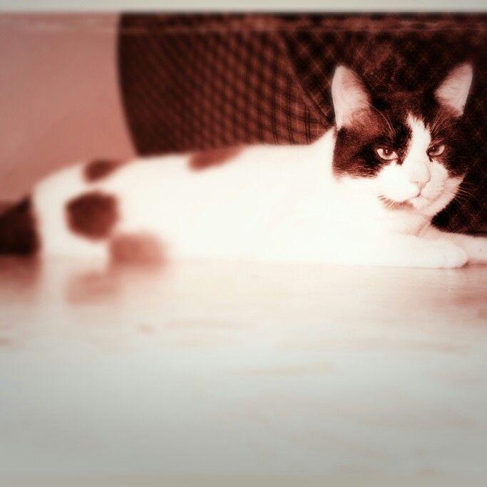 #Goku #cat #sleep #holiday #gatto