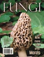 Spring rains often make way for the first mushrooms of the year! This neat map of morel sightings tells you when you might see them in your area. If you plan to consume what you find, make sure that you go out with an experienced group, such as the Illinois Mycological Association. Also, you can legally pick mushrooms only on certain public lands, so check your local, county, and state regulations before planning an outing.
