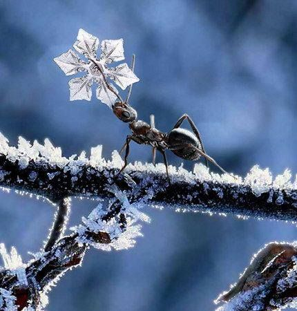 Ant carrying a tiny snowflake, We all living beings are made of the same energy and substance either mater or antimatter, therefore we have to respect life in all its disguises, don't support animal killing for meat and pollution, go vegan and green for all, NinaOhman, http://www.ninaohmanarts.com