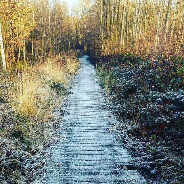 Ook @kathy0kitty ging al wandelen in het natuurgebied van de maand. #altijdlimburg #belgianlimburg #beautifuldestinations #visitbelgium #nature #tree #tree_magic #tree_brilliance #view #frozen #cold #forest #wanderlust #explore #travelgram #instatravel #instagood #hiking #wandelen #walking #discoverearth by toerismelimburg. explore #wanderlust #discoverearth #cold #instagood #instatravel #altijdlimburg #forest #tree_magic #visitbelgium #hiking #view #travelgram #tree_brilliance…