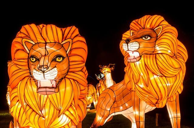 Chinese Light Festival at Longleat features hundreds of thousands of colored lights and the artistry of 70 Chinese light sculpture makers. On until January 4, 2015