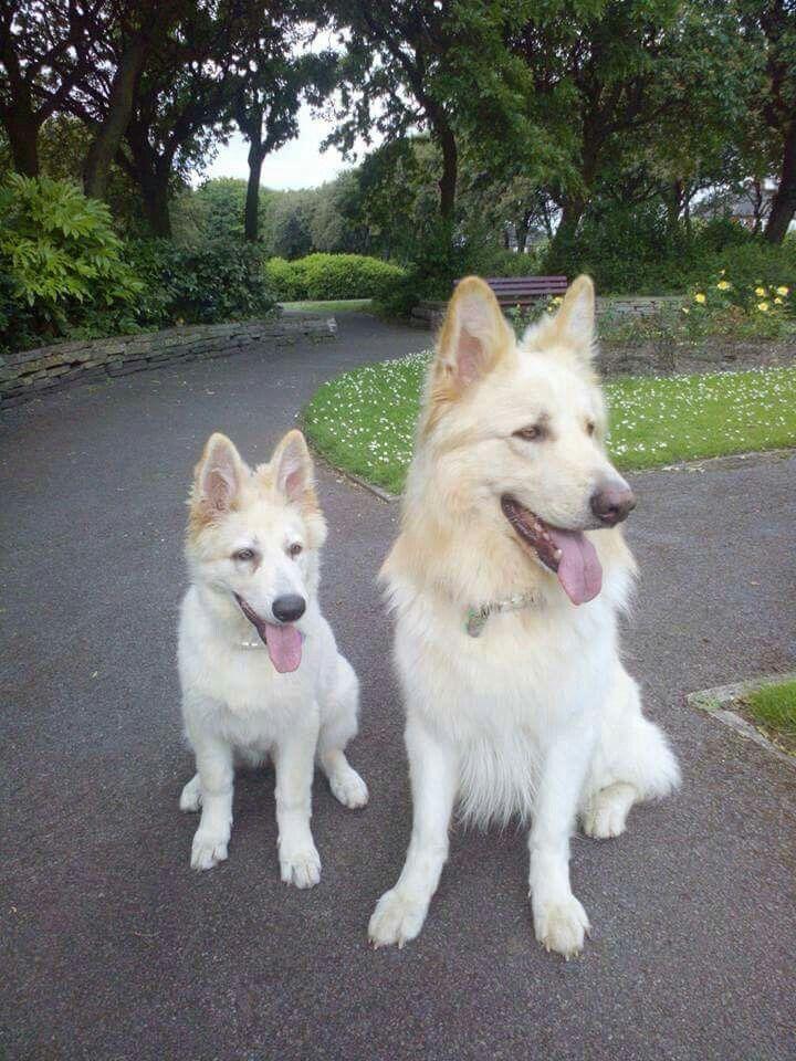 Blonde & white GsD