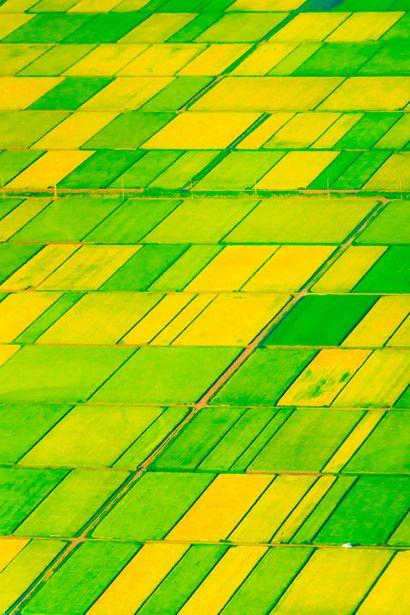 Rice Field in Summer  | 自然・風景 > 大地の写真 | GANREF