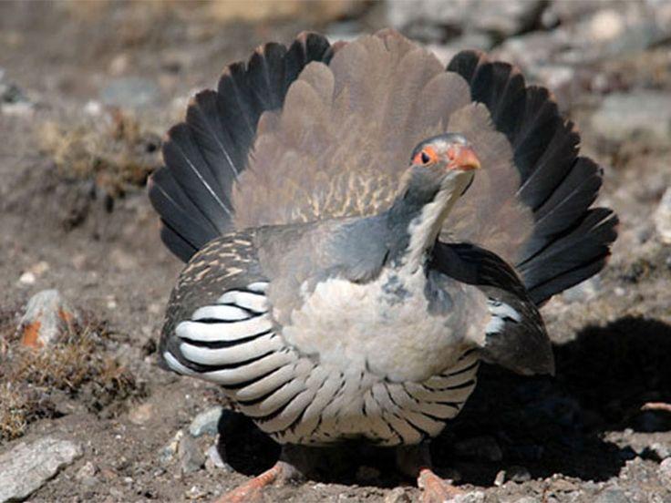 Overa Wildlife Sanctuary - in Srinagar, Jammu & Kashmir, India